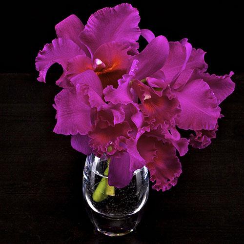 Index of images18 flowers of one type hot pink cattleya in teardrop vaseg mightylinksfo